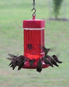 The best advisers from a hummingbird feeder review
