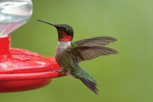 The exact Functionality of a hummingbird feeder in a review and in a comparison?
