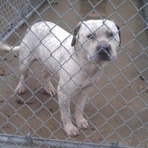 The dog will be put down today because the kennel housing him is overcrowded (Image: Facebook)