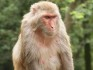 The treatment was tested on rhesus macaques