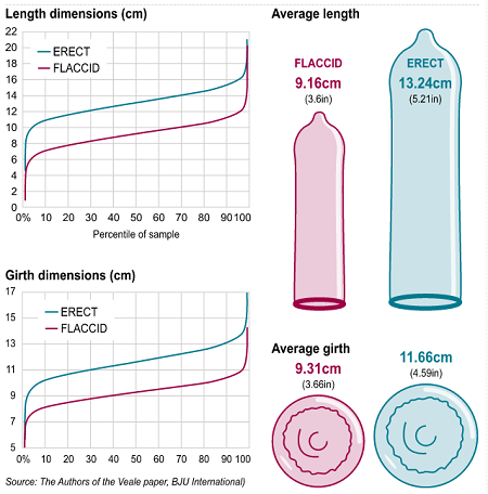 What is the average size of a dick