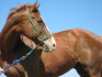 The report claimed the horse was put to death for attempting to mate with another male