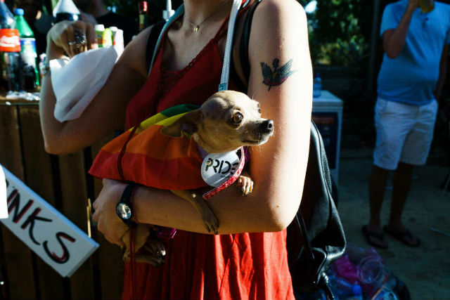 A dog at Pride in Cyprus
