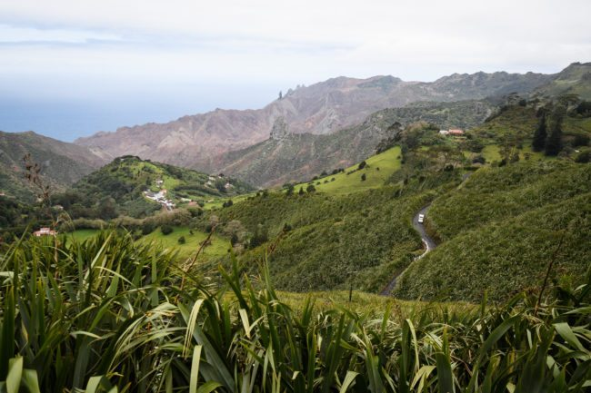 "SANDY BAY, SAINT HELENA - OCTOBER 27:  Swathes of flax plants fill the valleys and fields on October 27, 2017 in Sandy Bay, Saint Helena. Following the introduction of weekly flights to the island, resident St Helenians, known locally as ""Saints"", are preparing for a potential influx of tourists and investment as well as enjoying the possibilities brought by much faster transport links with South Africa. Previously, travel to the island involved travelling for a week by the Royal Mail Ship (RMS) ""Saint Helena"" from Cape Town. Saint Helena is a 46 square mile island in the South Atlantic which has been under British control since 1834.  (Photo by Leon Neal/Getty Images)"