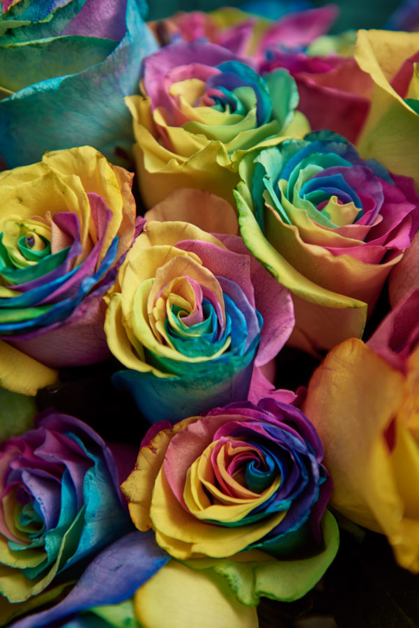 Part of Morrisons' The Best range, the Rainbow Rose has been designed so that anyone can give it to anyone else and to support homeless LGBT youth on Valentine's Day.