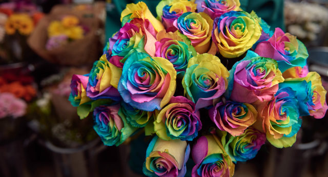 Morrisons florists are celebrating all types of lovers this Valentine's Day, creating the Rainbow Rose to support homeless LGBT+ youth. (Supplied)