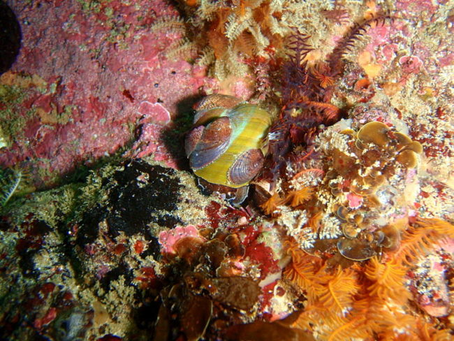 Gender-bending animals that can change sex or appearance: Slipper limpets can change their sex from male to female once in physical contact with another male.