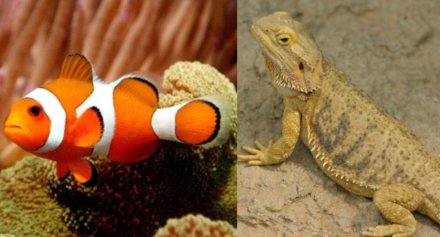 Animals that can change sex.