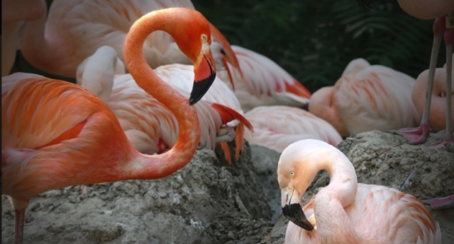 Denver Zoo announces two gay flamingos ahead of Pride