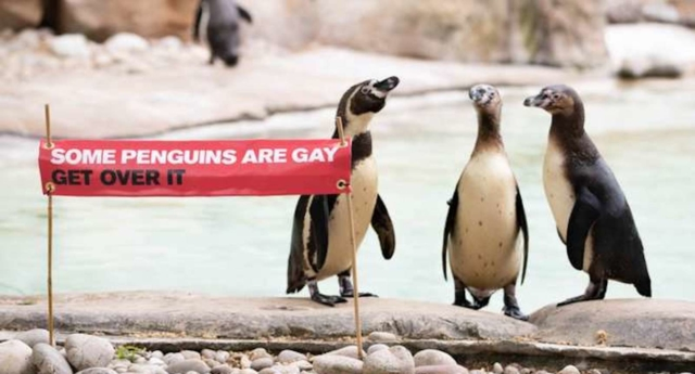 London Zoo: Some penguins are gay, get over it