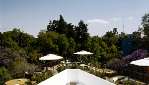 The Condesa df's roof terrace