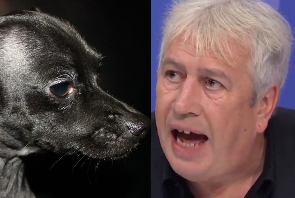 A black chihuahua and Rod Liddle